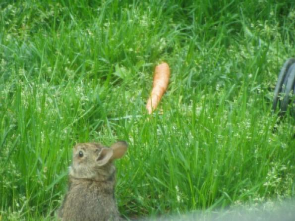 Peter Rabbit 3