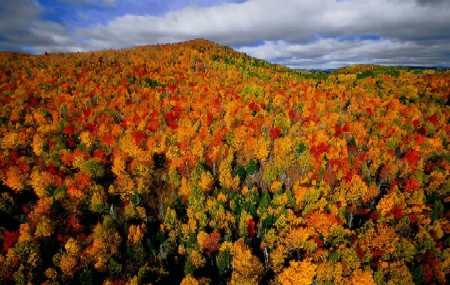 Autumn Leaves in Quebec