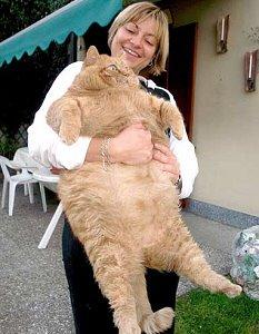 Real Life Garfield